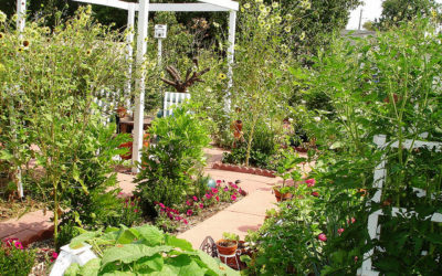 The Basics of Setting up Your Own Garden