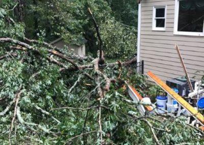 Snellville GA Tree Removal