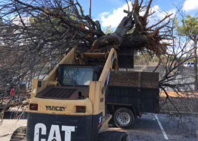 Tree Removal Buford GA